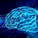 """脳関門を通過してアセチルコリン濃度を増やす""""アセチル-L-カルニチン""""の効果"""
